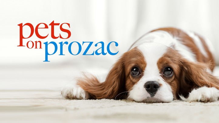 Pets on Prozac