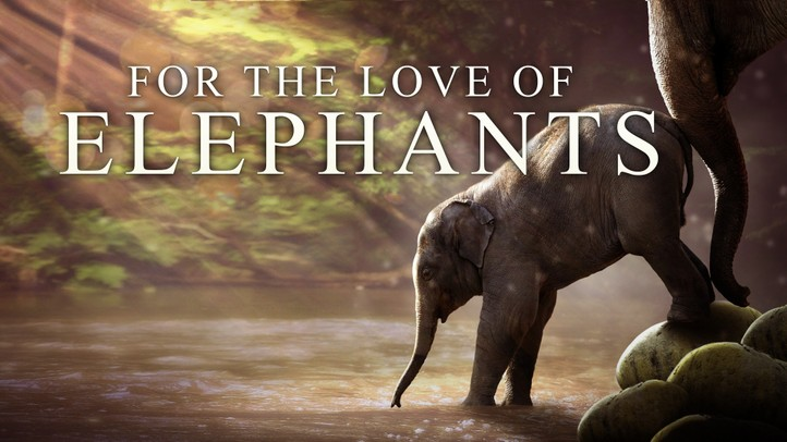 For the Love of Elephants 4K