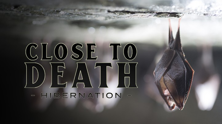 Close to Death: Hibernation