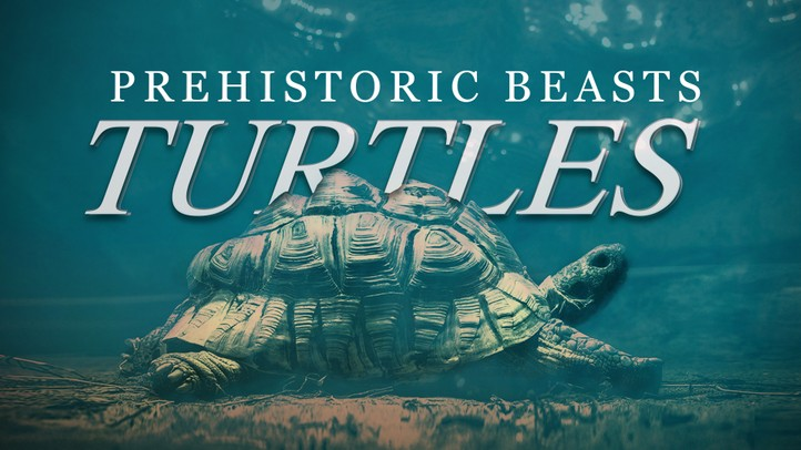 Turtles: Prehistoric Beasts