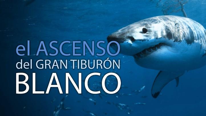 El Ascenso del Tiburón Blanco
