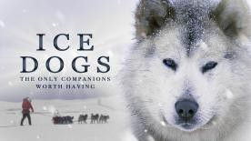 Ice Dogs 4k