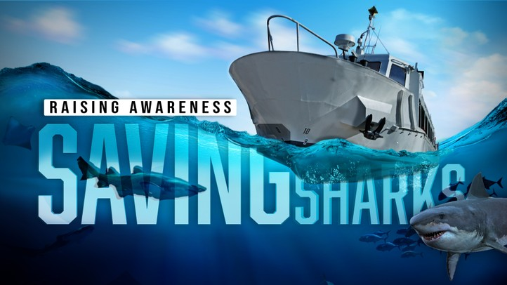 Saving Sharks: Raising Awareness