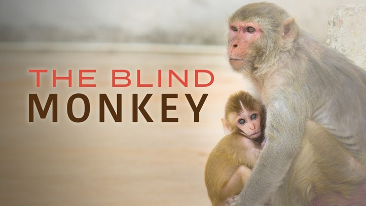 The Blind Monkey