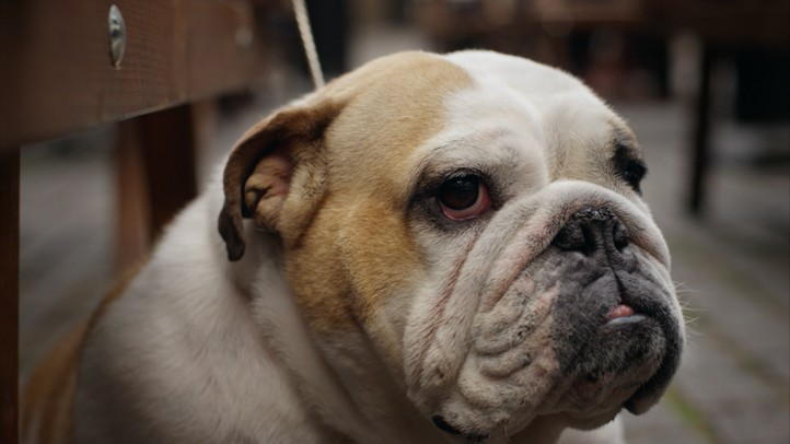 Dog's Best Friend 4K