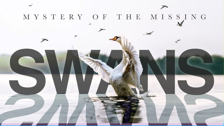 Swans: Mystery of the Missing 4k