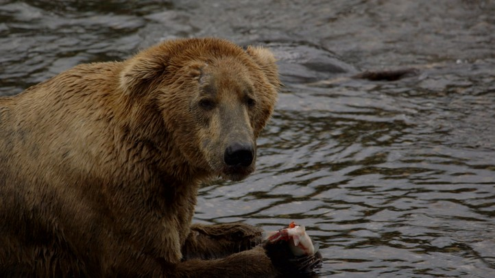Katmai: Where the Bears Are
