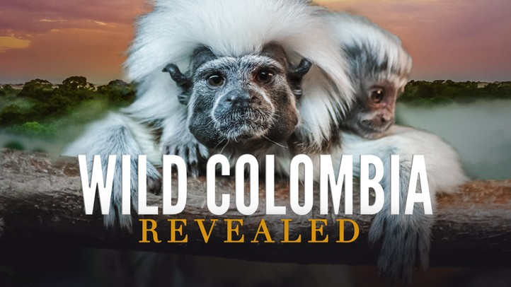 Wild Colombia Revealed 4k