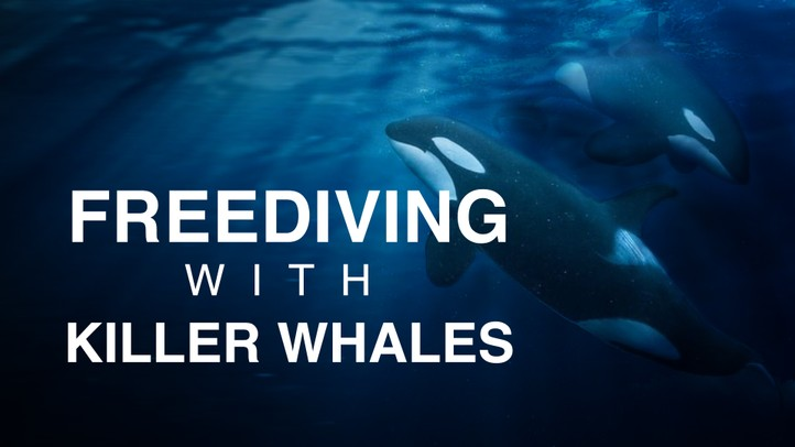 Free Diving With Killer Whales