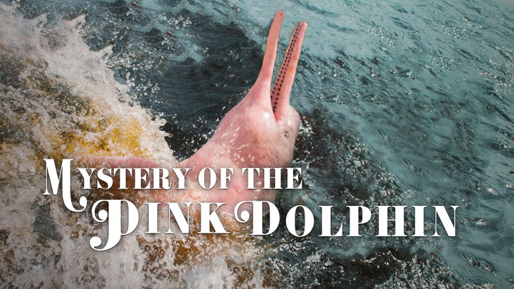 The Mystery of the Pink Dolphin