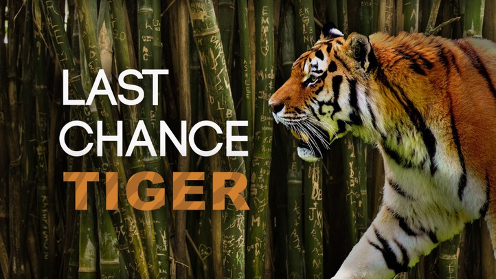 The Last Chance Tiger