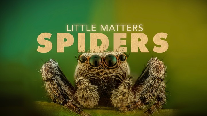 Little Matters: Spiders