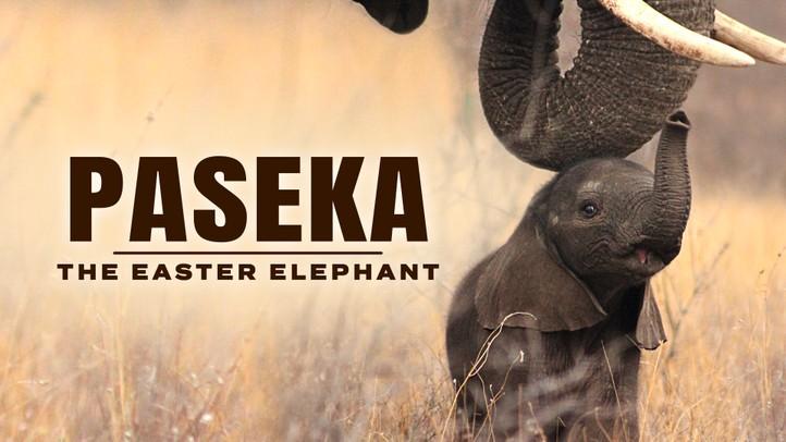 Paseka: The Easter Elephant