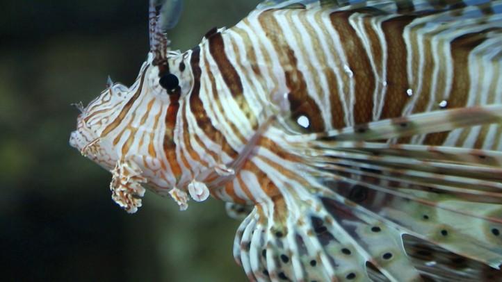 Underwater Predators