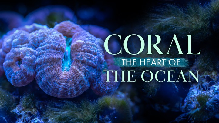Coral: Heart of the Ocean