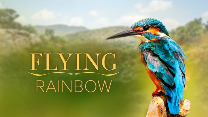 Flying Rainbow