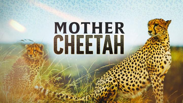 Mother Cheetah