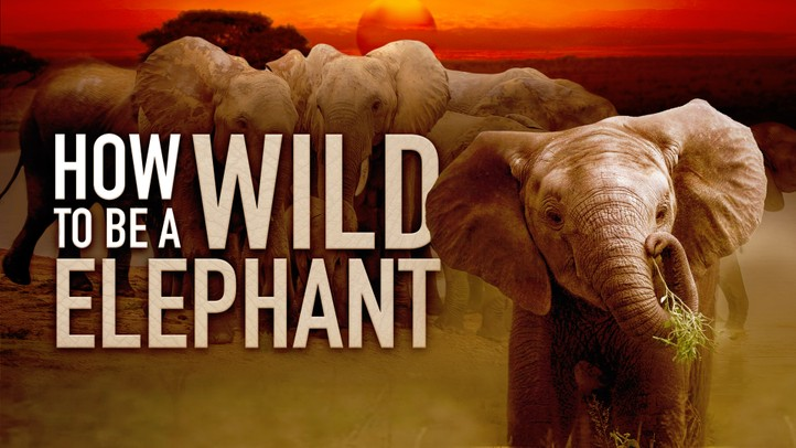 How to Be a Wild Elephant 4K