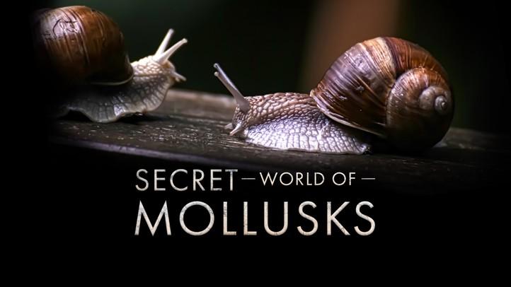 Secret World of Mollusks