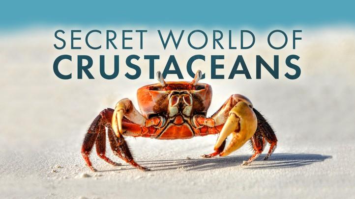Secret World of Crustaceans