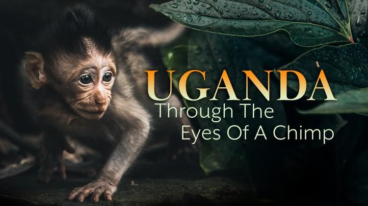 Uganda Through the Eyes of a Chimp